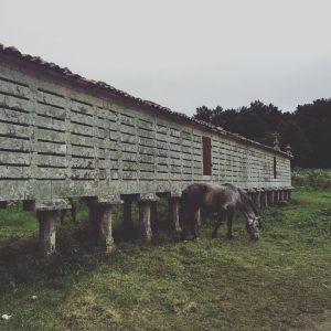 horre-carnota-caballo